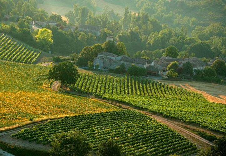 Los chinos han comprado viñedos de alta productividad dentro del territorio francés. (France.fr)
