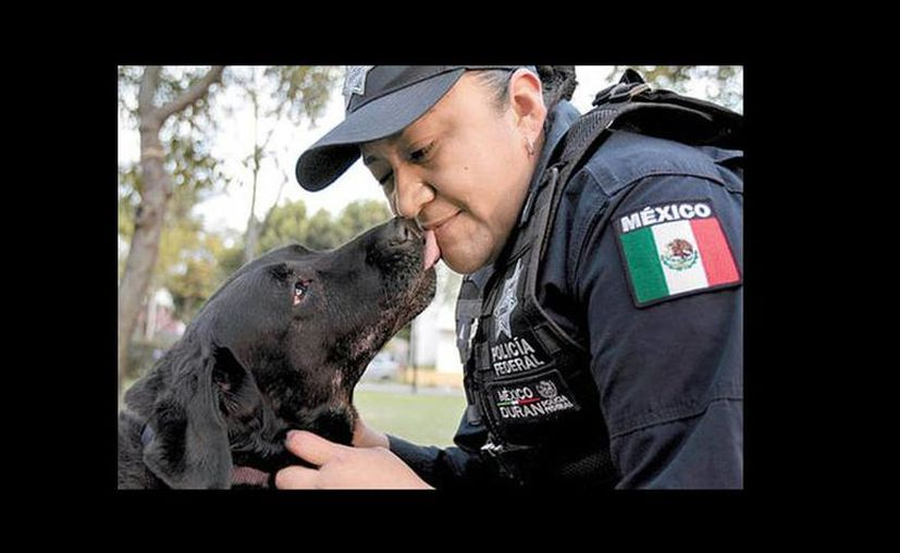 """""""Claudia"""", una de las ejemplares que pasó a retiro lame a una policía con quien compartió operativos. (Javier Ríos/Milenio)"""