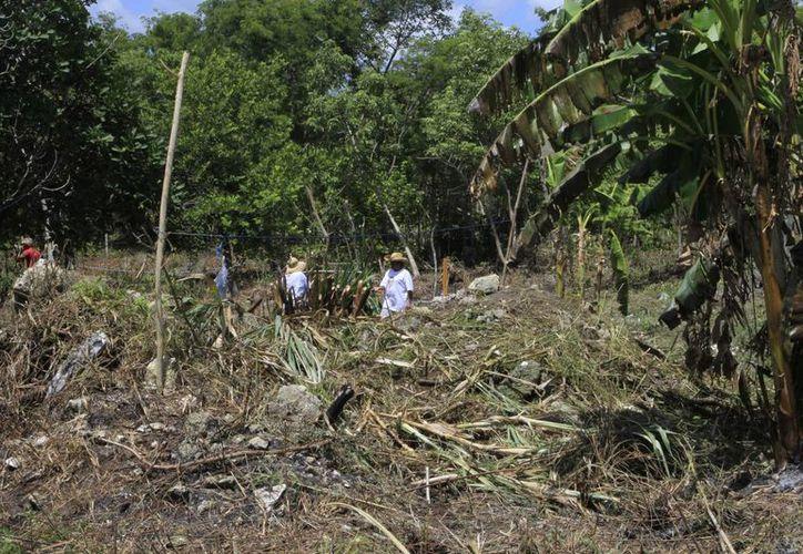 """El """"Kilómetro 55"""" en la comunidad de Mahahual nuevamente se viste de lonas, toldos y casas de campaña por invasores. (Ángel Castilla/SIPSE)"""