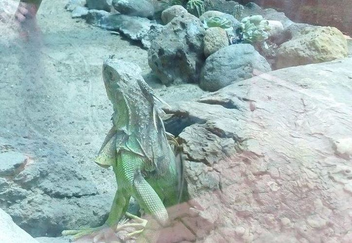 La Profepa decomisó decenas de ejemplares exóticos en el Zoológico de Moroleón, Guanajuato, debido a no contar con documentación que avalara su legal procedencia. (Facebook/Profepa)