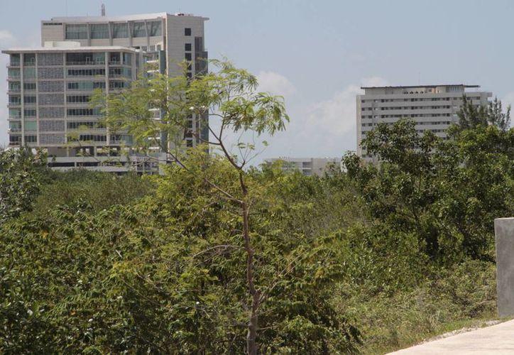 El Ecopark es un espacio que comprende 107 hectáreas y es propiedad del Ayuntamiento de Benito Juárez. (Tomás Álvarez/SIPSE)