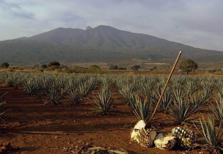 La Sectur aprobó un presupuesto de 25 mdp para impulsar a Tequila como el primer Pueblo Mágico Inteligente. Imagen de contexto. (visita.jalisco.gob.mx)