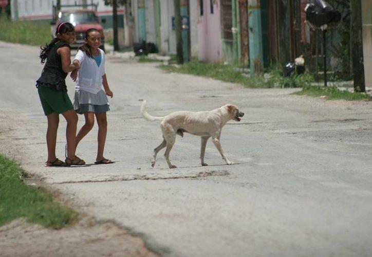 Los habitantes mencionan que son demasiados perros los que deambulan por las calles. (Edgardo Rodríguez/SIPSE)