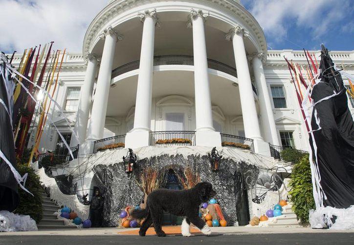 El perro del presidente estadounidense, Barack Obama, Bo pasea por la Casa Blanca en Washington, Estados Unidos. (Archivo/EFE)