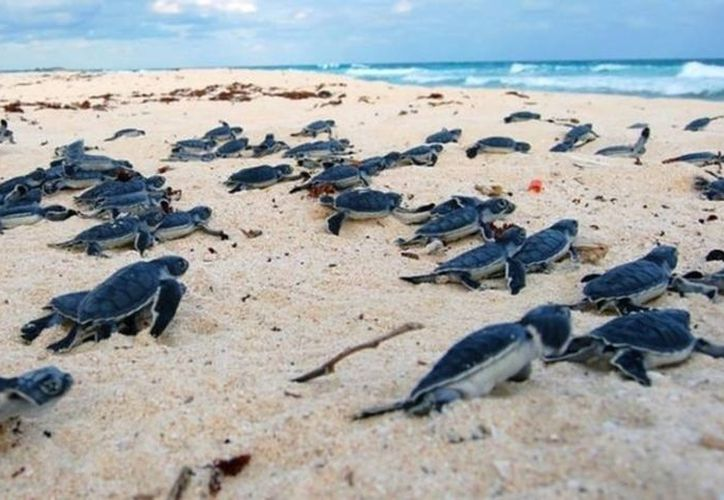 A pesar del curso de sensibilización inducido a los hoteleros de la ciudad, no se cumple la petición para dejar las playas libres de camastros y otros implementos colocados en las playas para uso del visitante. (Contexto)