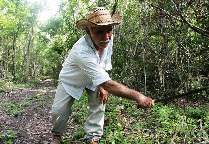El campo y la industria de Quintana Roo aportan poco a la economía nacional, según el Inegi. (Harold Alcocer/SIPSE)