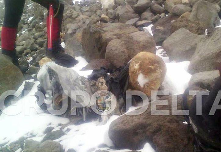 El Grupo Delta Serdán confirmó el hallazgo de otro cuerpo momificado en el Pico de Orizaba, Puebla dando aviso al Ministerio Público quien ordenó el levantamiento del mismo. (Tomado del Facebook de Grupo Delta 2014)