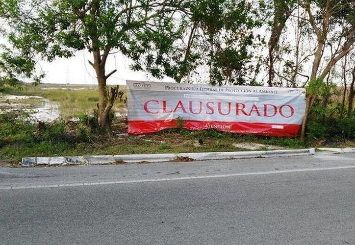 Profepa clausuró un predio en la zona hotelera de Cancún por la remoción de vegetación. (Profepa)