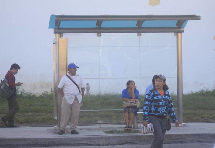 Los paraderos de transporte público no son óptimos para la población. (Harold Alcocer/SIPSE)