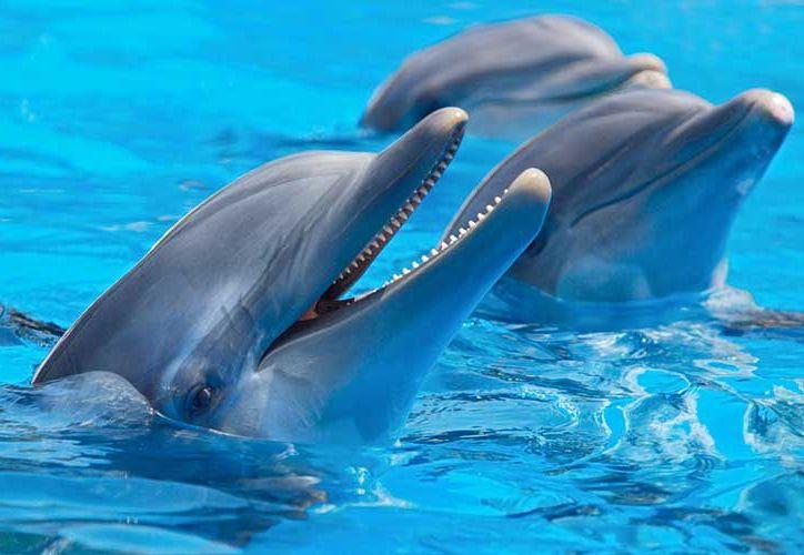 Los delfines son indicadores naturales del bienestar de los ecosistemas marinos. (Foto: Contexto)