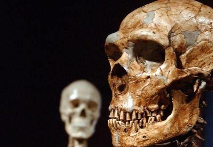 El Neanderthal ocupó hace 250 mil años una región que actualmente ocupa Italia, esto se reveló tras estudiar unos cráneos que fueron encontrados en una cavidad de arena al lado del río Aniene. (Archivo AP)