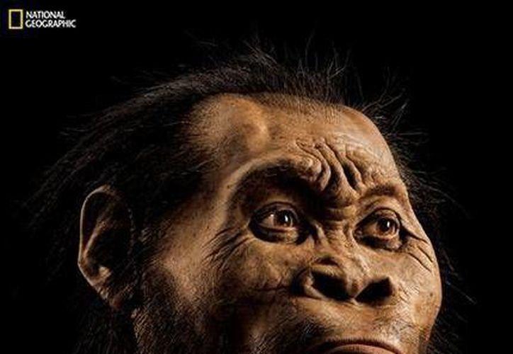 Esta imagen de marzo de 2015 proporcionada por National Geographic muestra la reconstrucción de la cara de un homo naledi realizada por el experto John Gurche en su estudio de Trumansburg, Nueva York. (Agencias)