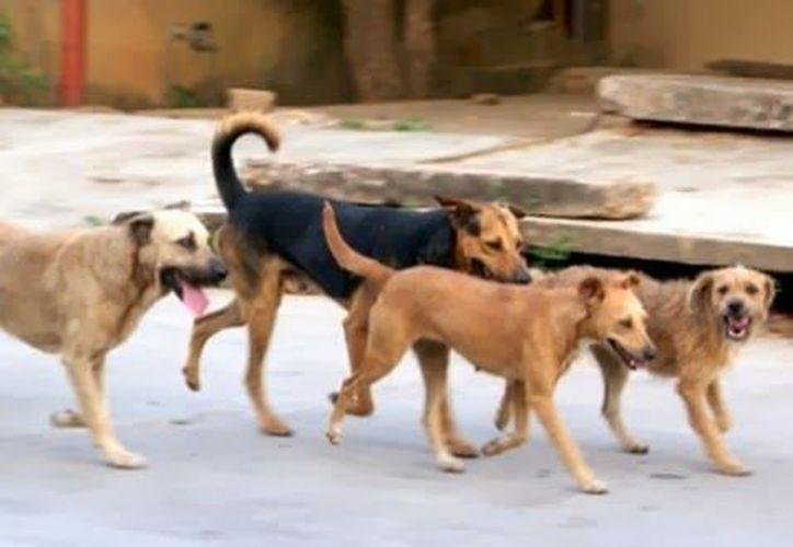 La legislación tiene lagunas que permiten la impunidad hacia los agresores de los animales. (Redacción/SIPSE)