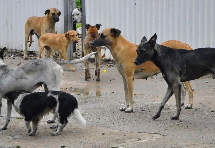 Los perros que muerden a las personas deben someterse a vigilancia durante 10 días para detectar si tienen rabia. (Contexto)