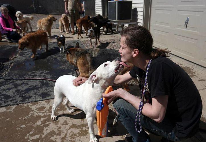 El cuidador Dallas Delgado interactúa con un perro en la Pensión Canina de Primera Clase de Wausau, Wisconsin, el martes 14 de abril de 2015. (Foto: Dan Young/The Wausau Daily Herald vía AP)