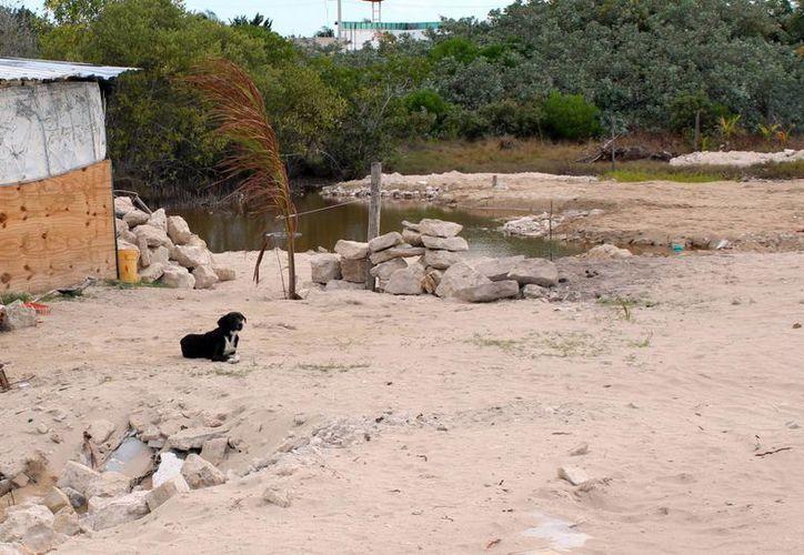 En Yucatán esta problemática ha ido creciendo en los últimos años, principalmente en el corredor costero de las comisarías de Chicxulub Puerto y Chelem. (Archivo/ Milenio Novedades)