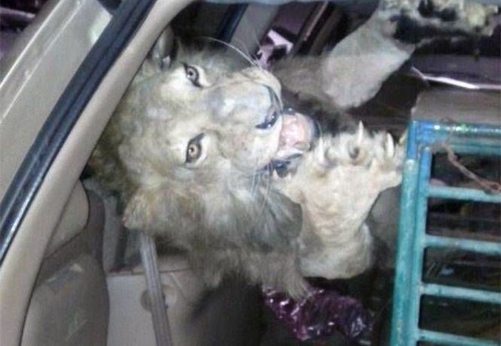 El arresto del hombre con los animales desnutridos ocurrió en una colonia de la  delegación Azcapotzalco. (excelsior.com.mx)