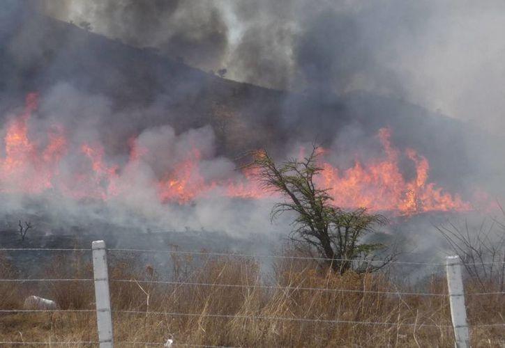 Profepa encontró al menos 400 hectáreas devastadas. (Notimex)