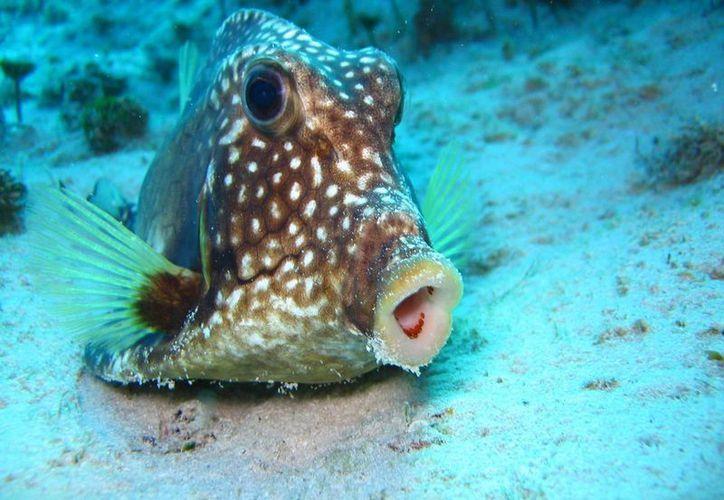 Durante los meses otoñales la fauna marina es mayor, sin embargo hay poca demanda para observarla.  (Cortesía/Ramón Duran)