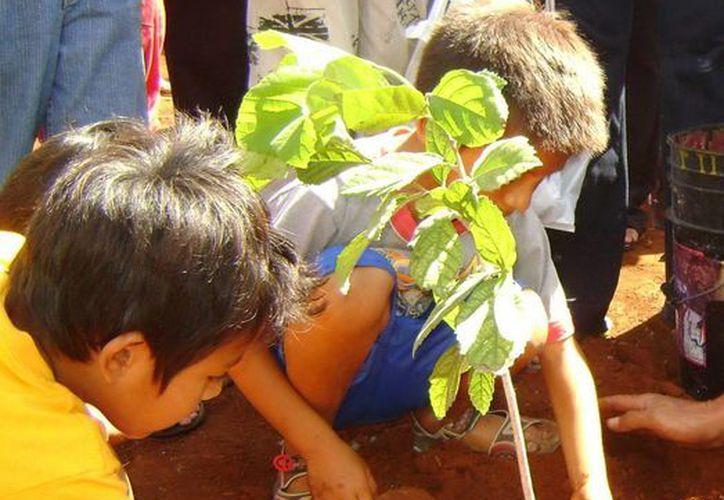 Al nivel mundial, la organización logró plantar -hasta el 2010- un millón de árboles a tan sólo tres años de su fundación. (Milenio Novedades)