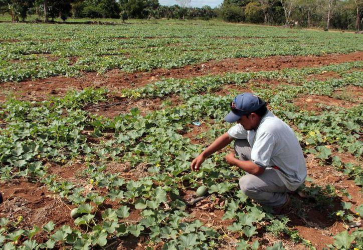 La revisión y actualización de las leyes agrarias es necesaria para modernizar el campo. (SIPSE)