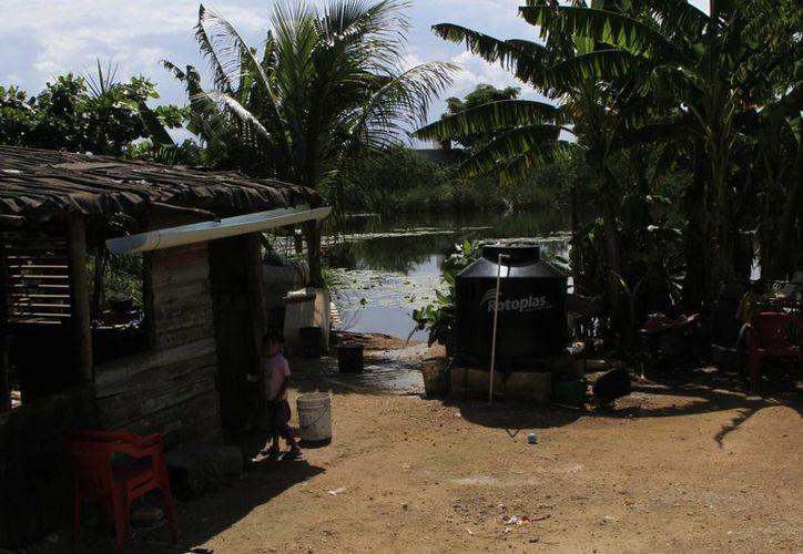 Los espacios que acumulen agua limpia son perfectos para la reproducción del mosco. (Ángel Castilla/SIPSE)
