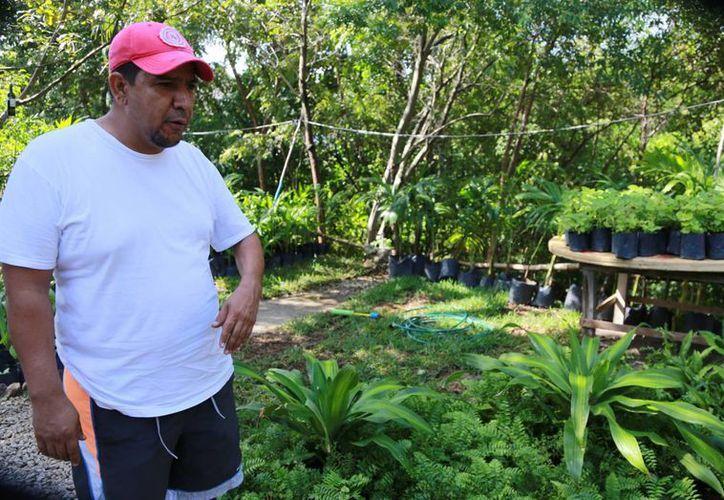 El primer vivero que está en la entrada del poblado  se expandirá. (Luis Soto/SIPSE)