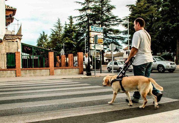 El perro guía que llegará a Yucatán para auxiliar a un sordociego tiene un costo de 400 mil pesos. La imagen es sólo de contexto (mayoralcan.com)