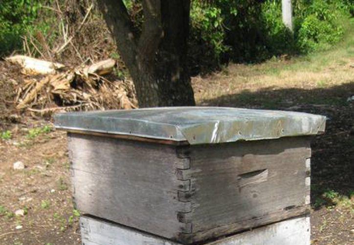 Las colmenas deberán ser reubicadas debido a la devastación que dejó el incendio forestal. (Javier Ortiz/SIPSE)