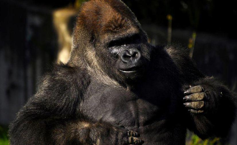 De comprobarse un mal manejo, el Zoológico de Chapultepec tendría que pagar una cuantiosa multa. (Notimex)