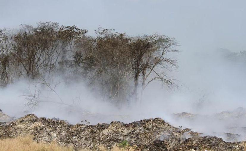 También participan brigadas rurales dirigidas por la Secretaría de Medio Ambiente. (Foto: Daniel Tejada/SIPSE)
