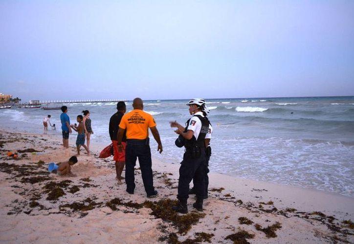 Un pelícano que fue confundido con una persona ahogándose, provocó la movilización de cuerpos de emergencia de Playa del Carmen. (Redacción/SIPSE)
