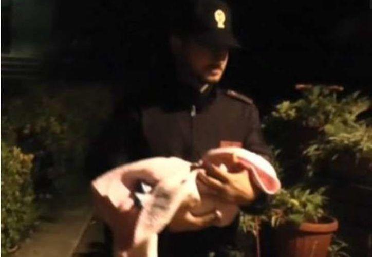 La policía rescató a una menor que fue vendida desde el vientre de su madre, y luego abandonada por su compradora y su progenitora. (Clarín)