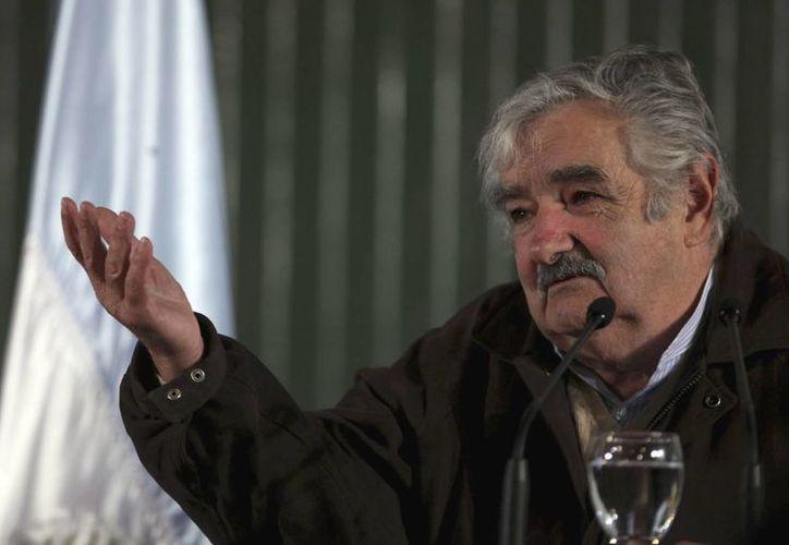"""Mujica declaró que """"se va a trabajar con clones, para reproducir el mismo código genético, con lo que se identifica dónde está. Porque no queremos ser productores para exportar"""".(Archivo/Agencias)"""