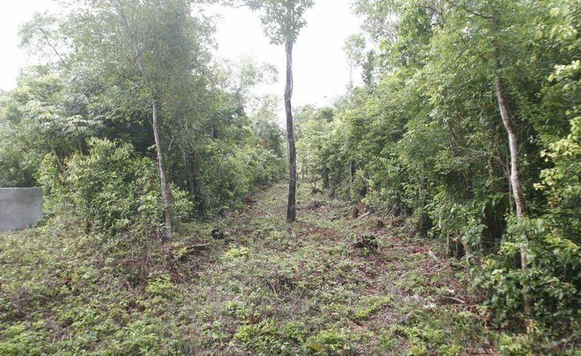 El objetivo es mantener la calidad de vida de los arboles (Harold Alcocer/SIPSE)