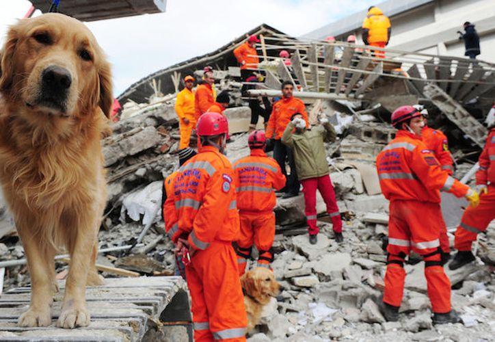 Por su parte, Petco dará asistencia gratuita a los animales damnificados. (Foto: Contexto/Internet).