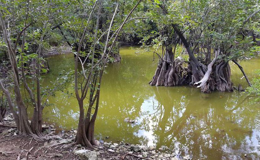 Hay peces, tortugas, garzas  y tejones, que sólo se acercan al lugar para tomar agua. (Victoria González/SIPSE)