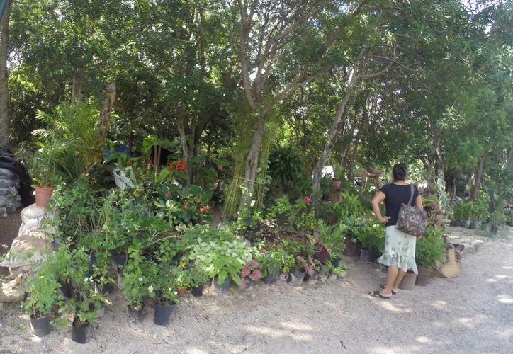 Las plantas y flores cuestan desde 20 hasta 100 pesos. (Luis Soto/SIPSE)