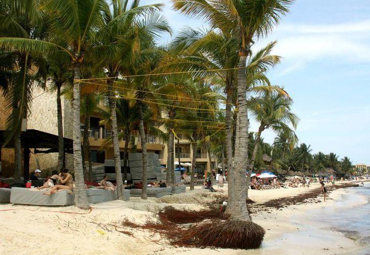 Pérdida de arena deja a la deriva una serie de palmeras. (Adrián Monroy/SIPSE)