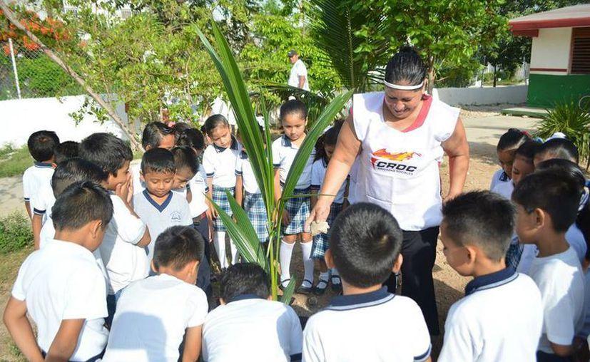 Los alumnos de nivel básico de 18 escuelas de Cancún participaron en la reforestación de sus escuelas. (Redacción/SIPSE)