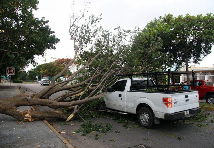 La parte delantera de la camionera resultó con cuantiosos daños. (SIPSE)