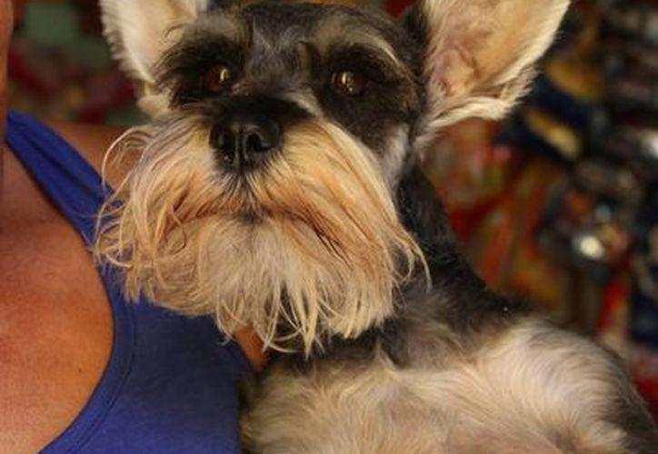 Los seguros para mascotas protegen a éstas de robo, extravío y enfermedades. (Consuelo Javier/SIPSE)