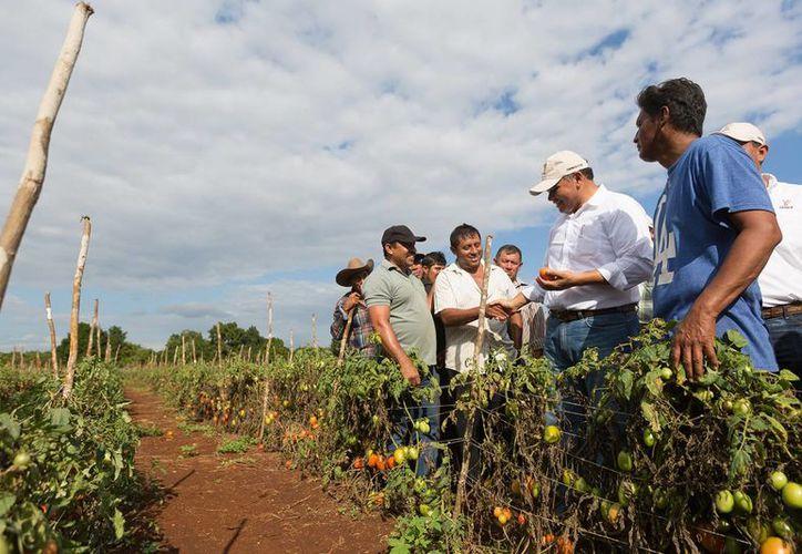 Yucatán no permitirá la entrada de transgénicos, según el titular de Seduma, Eduardo Batllori. En la gráfica, el Gobernador Rolando Zapata con agricultores. (SIPSE)
