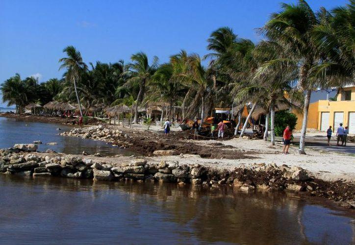 En el área terrestre se observan dunas, mangle y matorrales; en la zona marina, diversas especies de peces. (Enrique Mena/SIPSE)