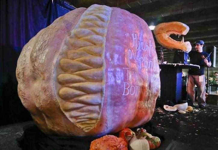 """Chris Vierra trabaja tallando en una calabaza gigante una """"criatura carnívora"""". (Agencias)"""