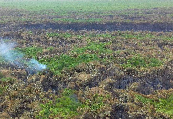 La vegetación dañada se considera de rápida recuperación. (Jesús Tijerina/SIPSE)