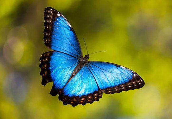 Milagrosamente el bello insecto se encontraba bien y pudo ser regresada al conservatorio. (La animalopedia)
