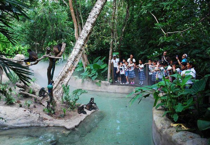 Visitantes al zoológico Payo Obispo podrán dar de comer a algunos animales. (Harold Alcocer/SIPSE)