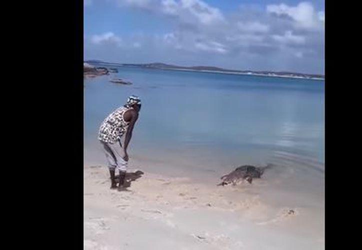 El cocodrilo,  apodado Nike, visita la playa con regularidad, donde es tratado con respeto y precaución. (Foto: Captura)