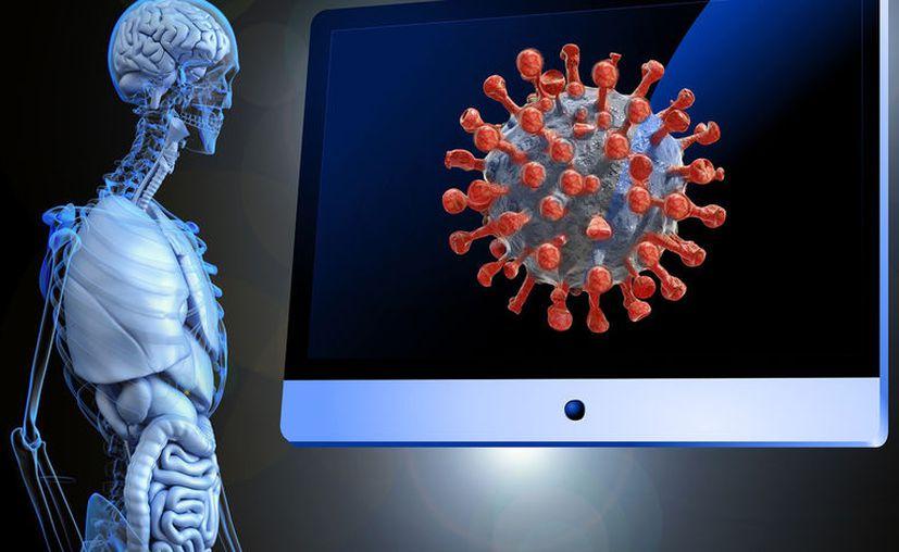 Investigadores exhortaron a la sociedad a frenar la expansión del virus contribuyendo con las medidas sanitarias propuestas por las autoridades. [Foto: Pïxabay]